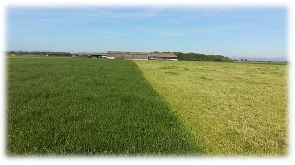 Pensez à la mise à l'herbe…
