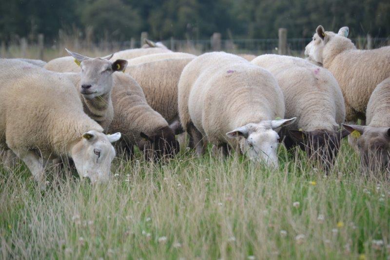 Formation désaisonnement lumineux en élevage ovin