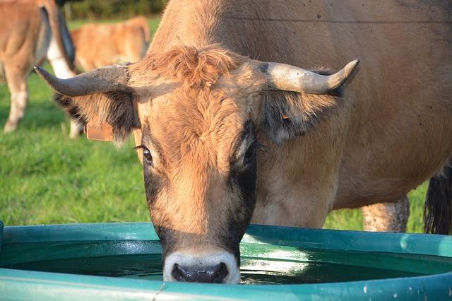 Abreuvement des animaux : Solutions de pompage solaire autonomes pour l'agriculture